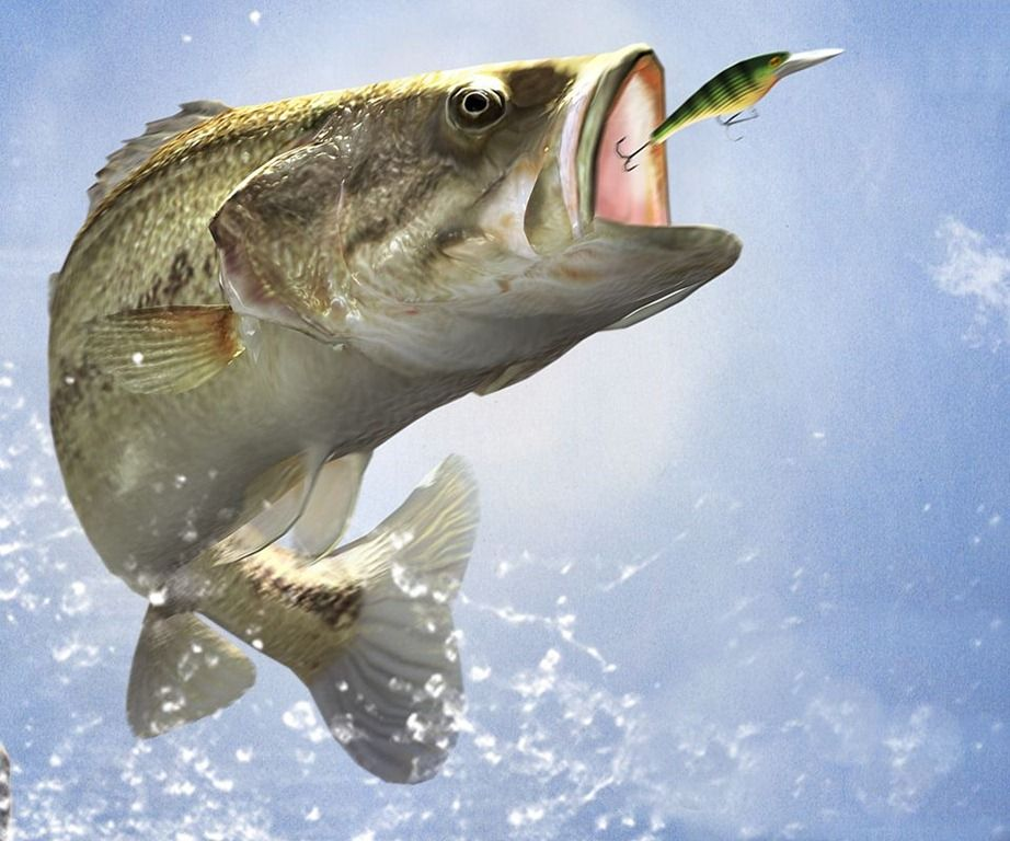 What Do Carp Eat?